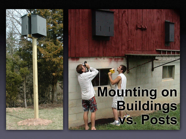 Mounting a Bat House on a Post vs. a Building
