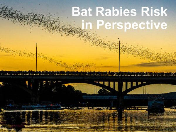 Bat Rabies Risk in Perspective