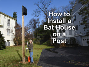 How to Install a Bat House