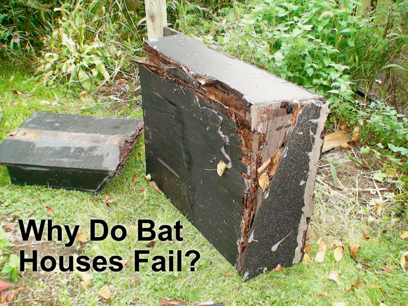 Do It Yourself Home Design: Why Do Some Bat Houses Fail?