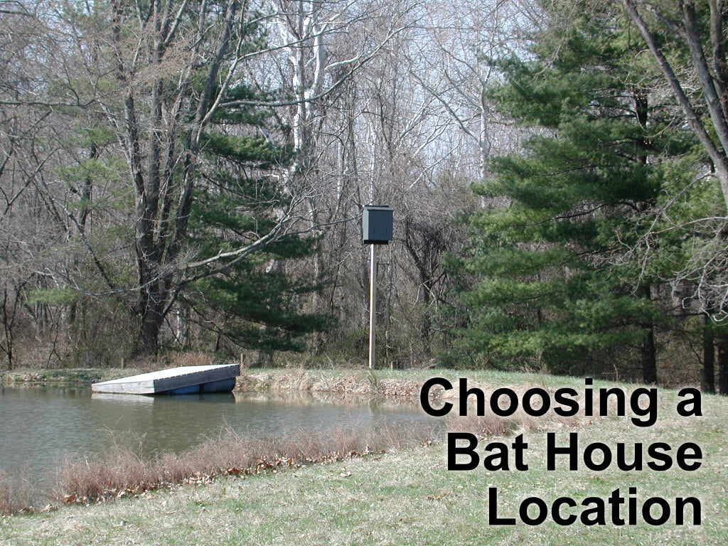 How To Choose A Bat House Location