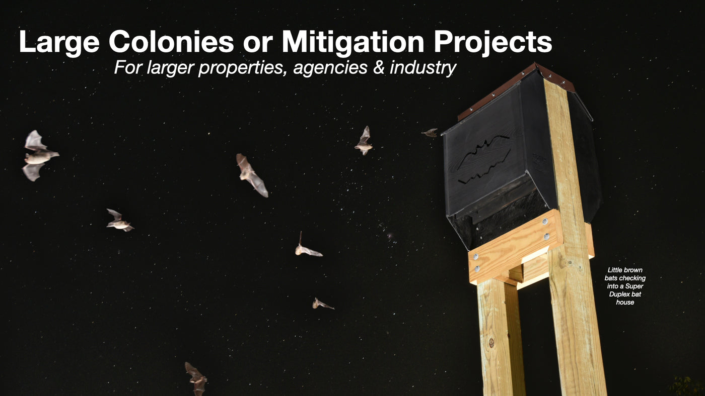 Big Bat Houses for Mitigation, Sanctuaries, or Large Colonies