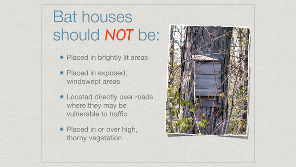 How To Choose A Bat House Location Bat Conservation And Management