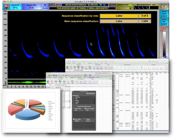 Bat Acoustic Analysis Service