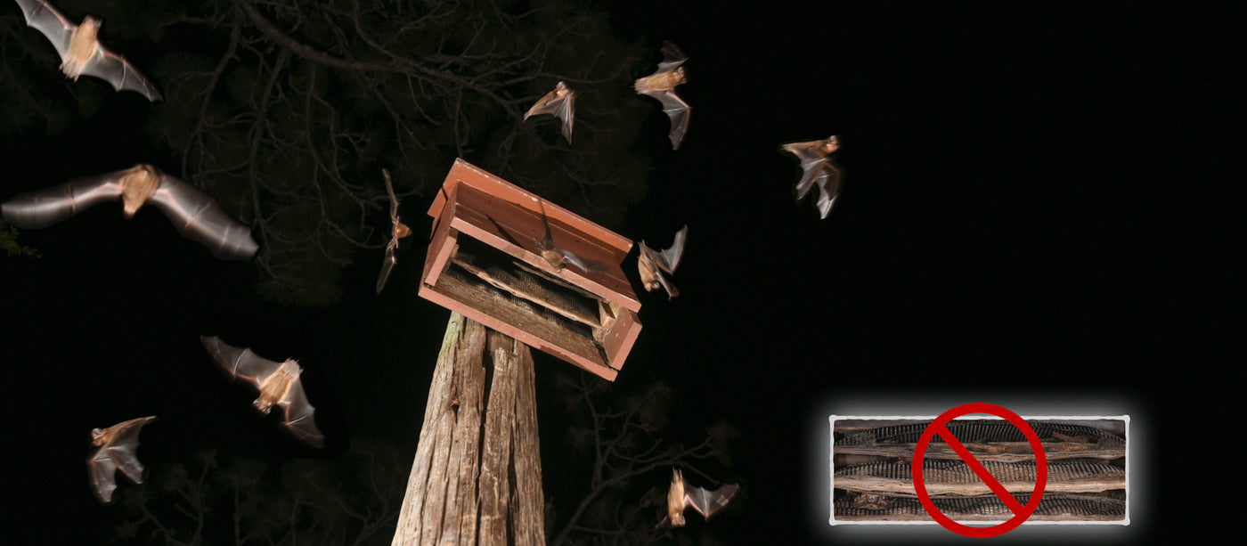 This bat house is a trap!