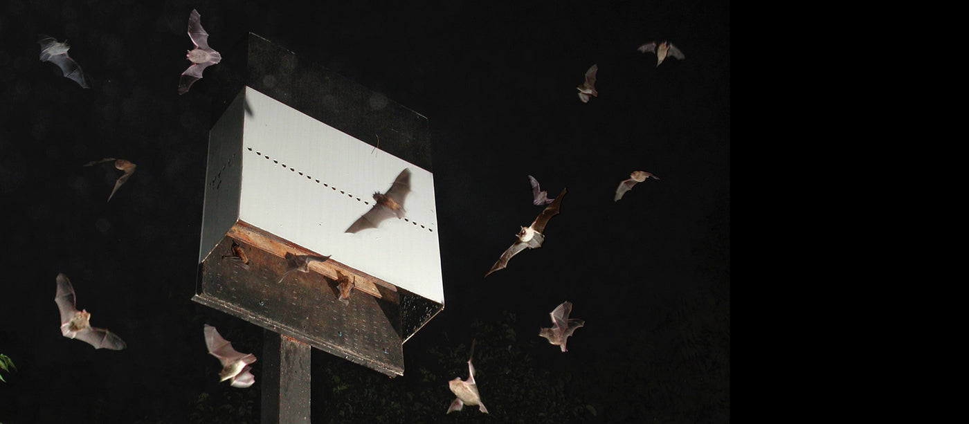 Bat Houses that work