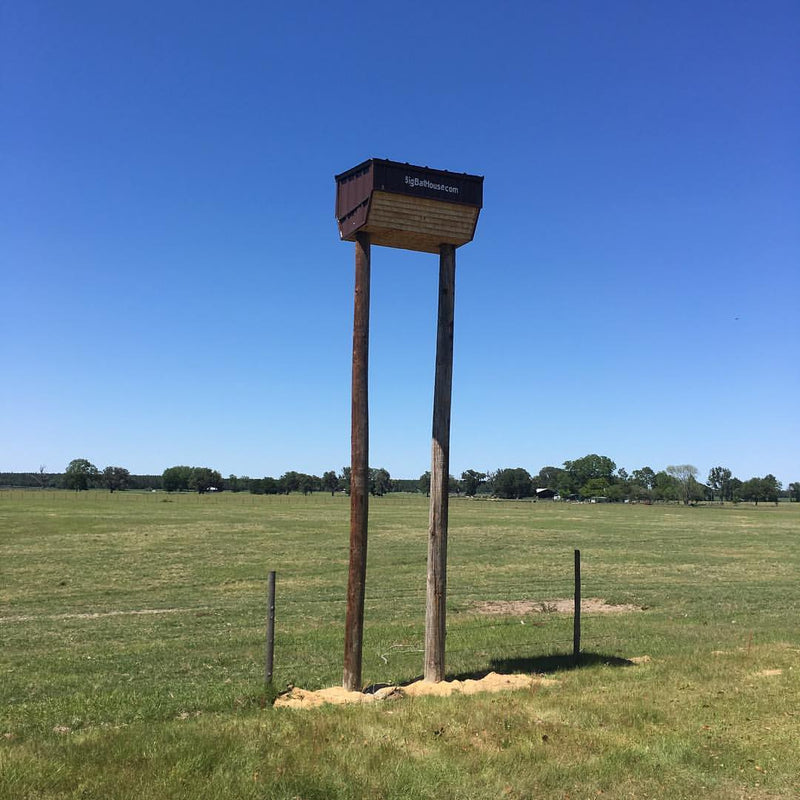 Wildlife Integrations Mini Bat Condo 442M