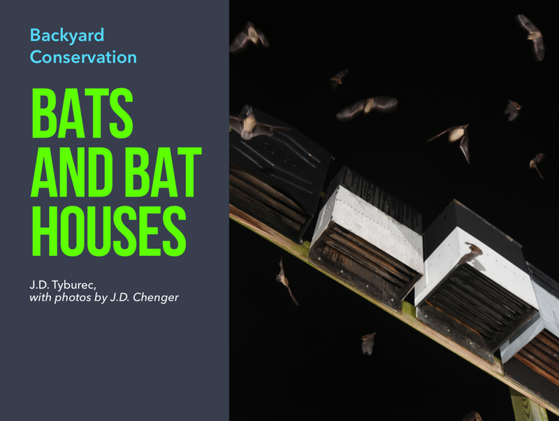 Bats and Bat Houses