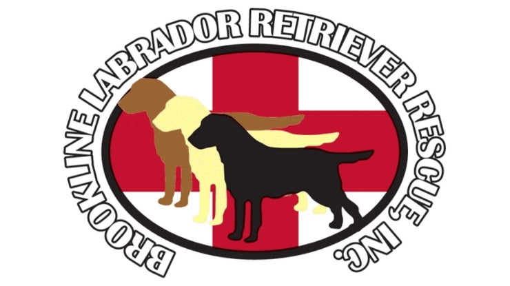 Brookline Labrador Retriever Rescue - Rescue of the Month, October 2018