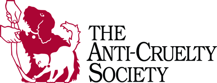 The Anti-Cruelty Society - Rescue of the Month, November 2018