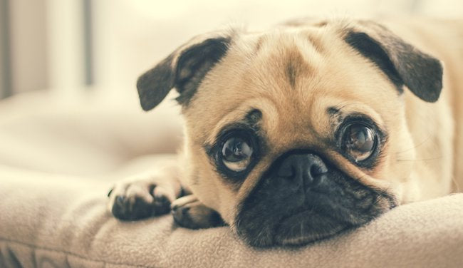 "Beware of ""Puppy Dog Eyes"""