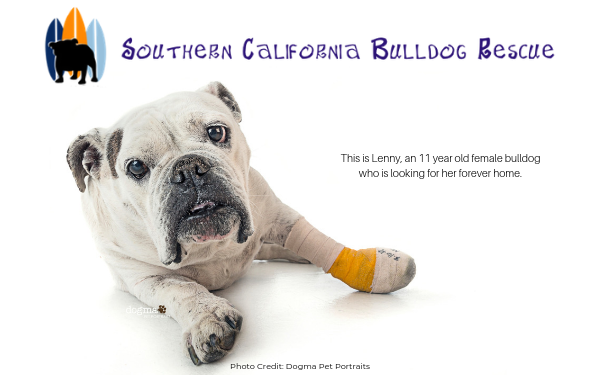 Southern California Bulldog Rescue - Rescue of the Month, September 2019