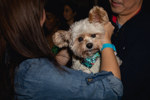 Popeye The Foodie Dog wearing Neptune & Co. dog bandana