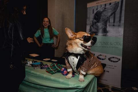 Super Corgi Jojo at the Neptune & Co. booth