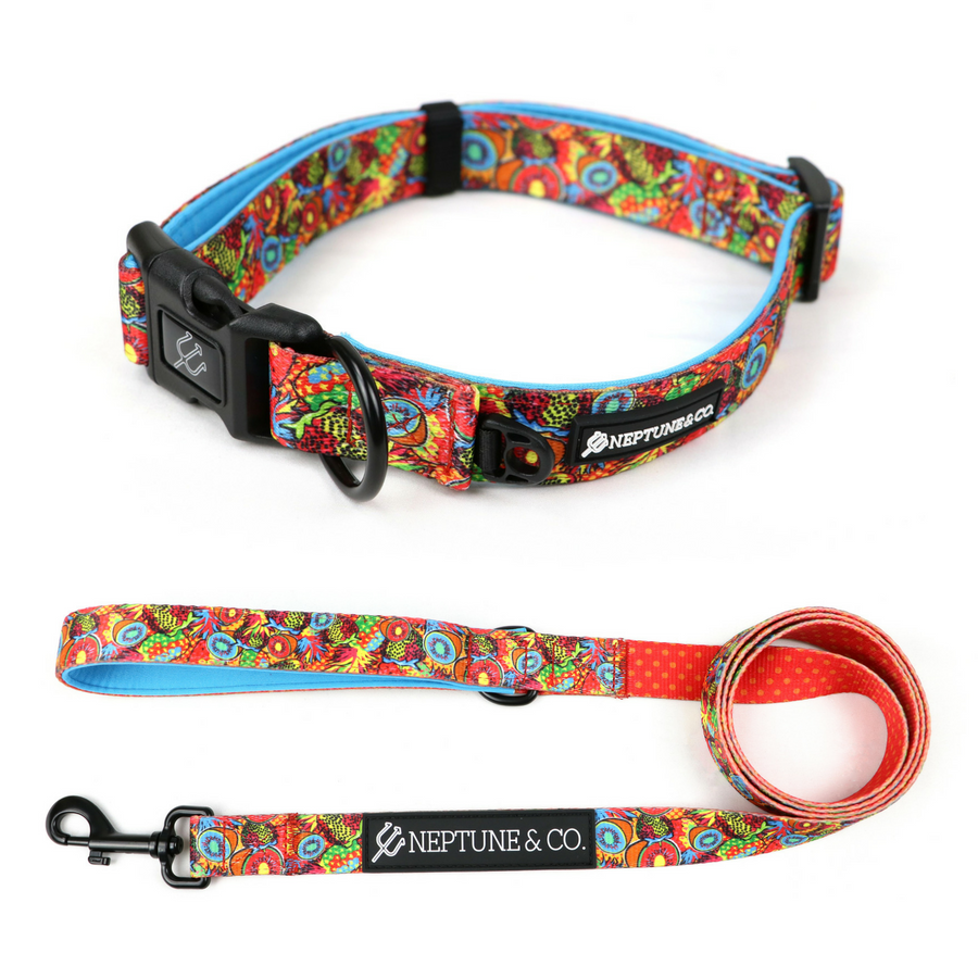 Pup Art Collar and Leash Set - Neptune & Co.