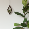 Diamond Walnut Hanger with Air Plant
