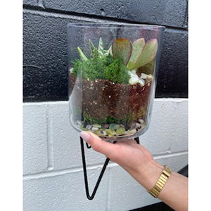 Tall Glass Cylinder Terrarium
