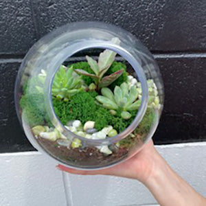 Large Glass Bowl Terrarium