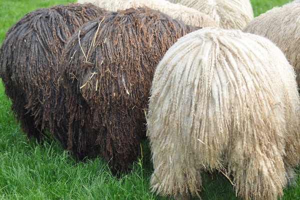 Wensleydale - Washed Black Wensleydale Fleece FOR COMBING OR CARDING 200g (7.05oz)