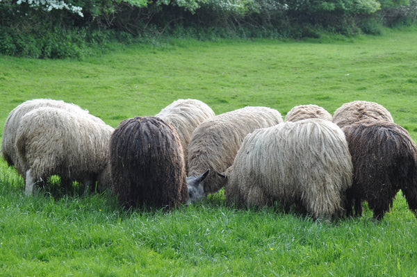 Wensleydale - Washed Grey Wensleydale Fleece (locks)