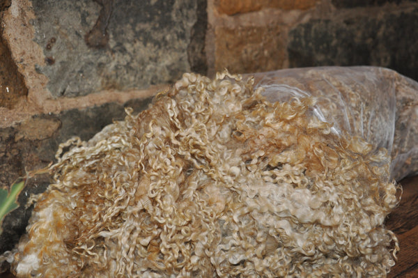 25g (0.88 oz) - Wensleydale Pulled locks/Fleece  (Raw Wool)