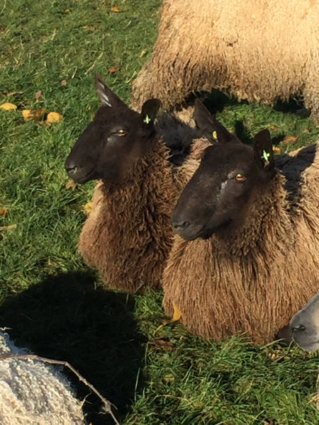 Home Farm Black Box - Raw Wool (fleece selection)