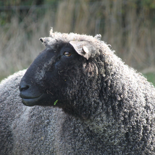 Available from mid December 2020 Grey Wensleydale Fleece (locks) (Raw Wool)