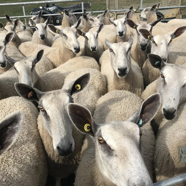 Bulky - Big Wool - Home Farm Grey -  Rare Breed Wensleydale and Bluefaced Leicester 50g (1.76 oz)