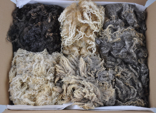 Home Farm Flock Box - Raw Wool (fleece selection)