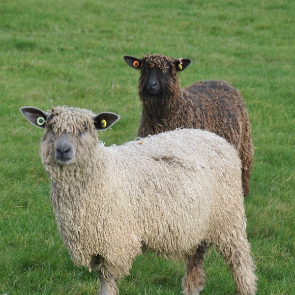 Rare Breed Wensleydale and Bluefaced Leicester: Millhouse Blue (Big Wool/Bulky)
