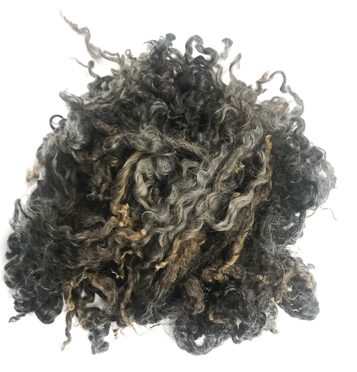 100g (3.5 oz) Sample - Wensleydale x Lincoln Longwool Lambs Fleece (locks) (Raw Wool)
