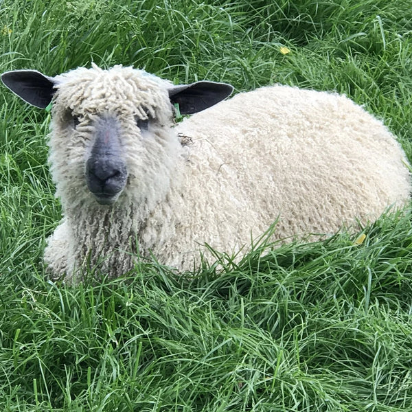 Rare Breed Wensleydale and Bluefaced Leicester: Home Farm Grey (Big Wool/Bulky) 50g