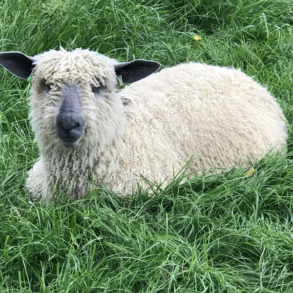 Rare Breed Wensleydale and Bluefaced Leicester: Tangerine (Big Wool/Bulky) 50g