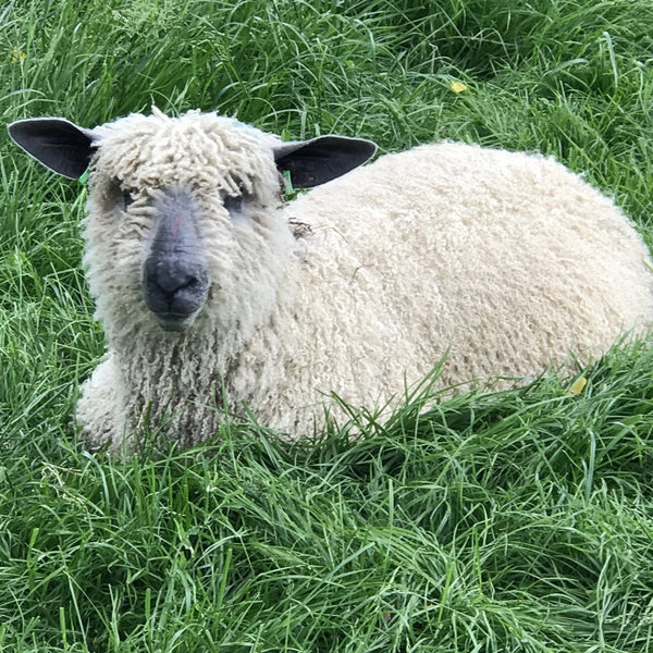 Rare Breed Wensleydale and Bluefaced Leicester: Natural (Big Wool/Bulky) 50g