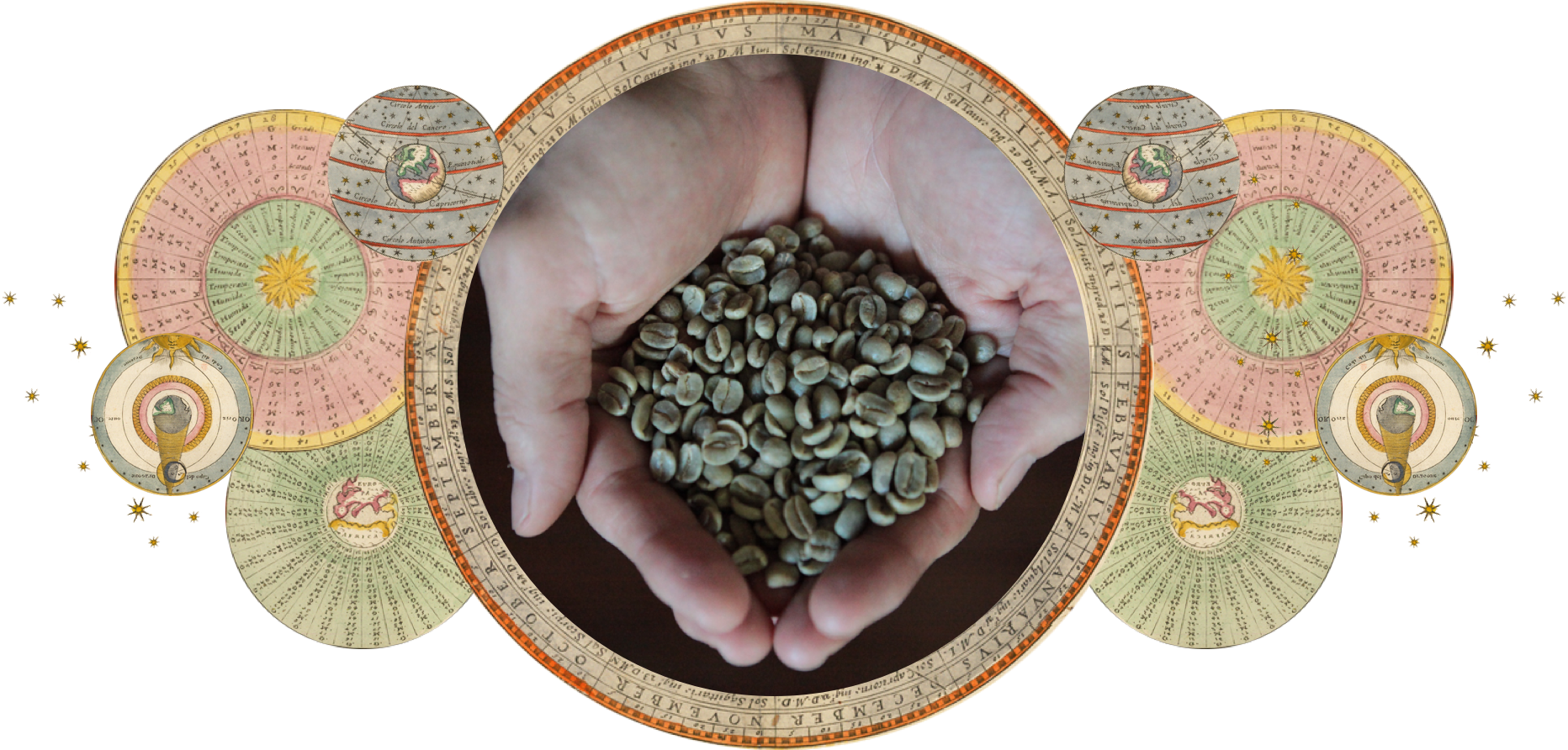 Coffee | Regenerative Farming | ZenBunni