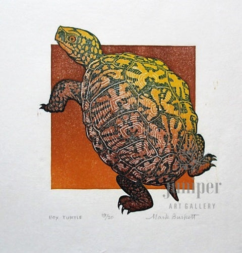 Box Turtle by Mark Burkett