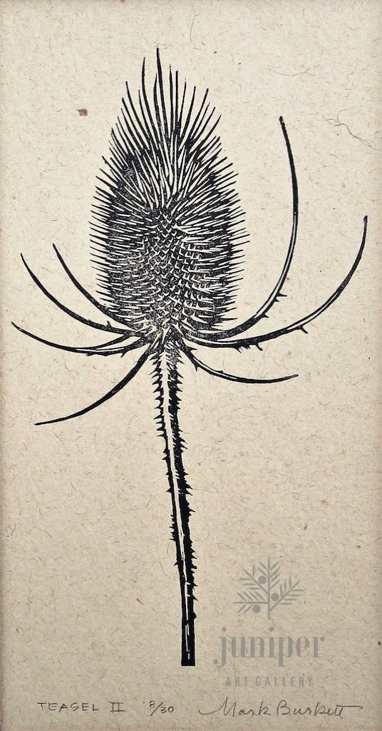 Teasel ll by Mark Burkett