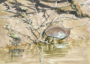 Softshell with Stinkpot by Brian Gordy