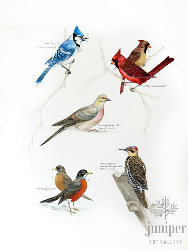 Common Indiana Birds (from original watercolor by Paul J Sweany)