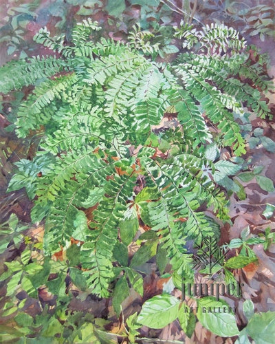 Maiden Hair Ferns, Ogle Lake by Jeanne McLeish