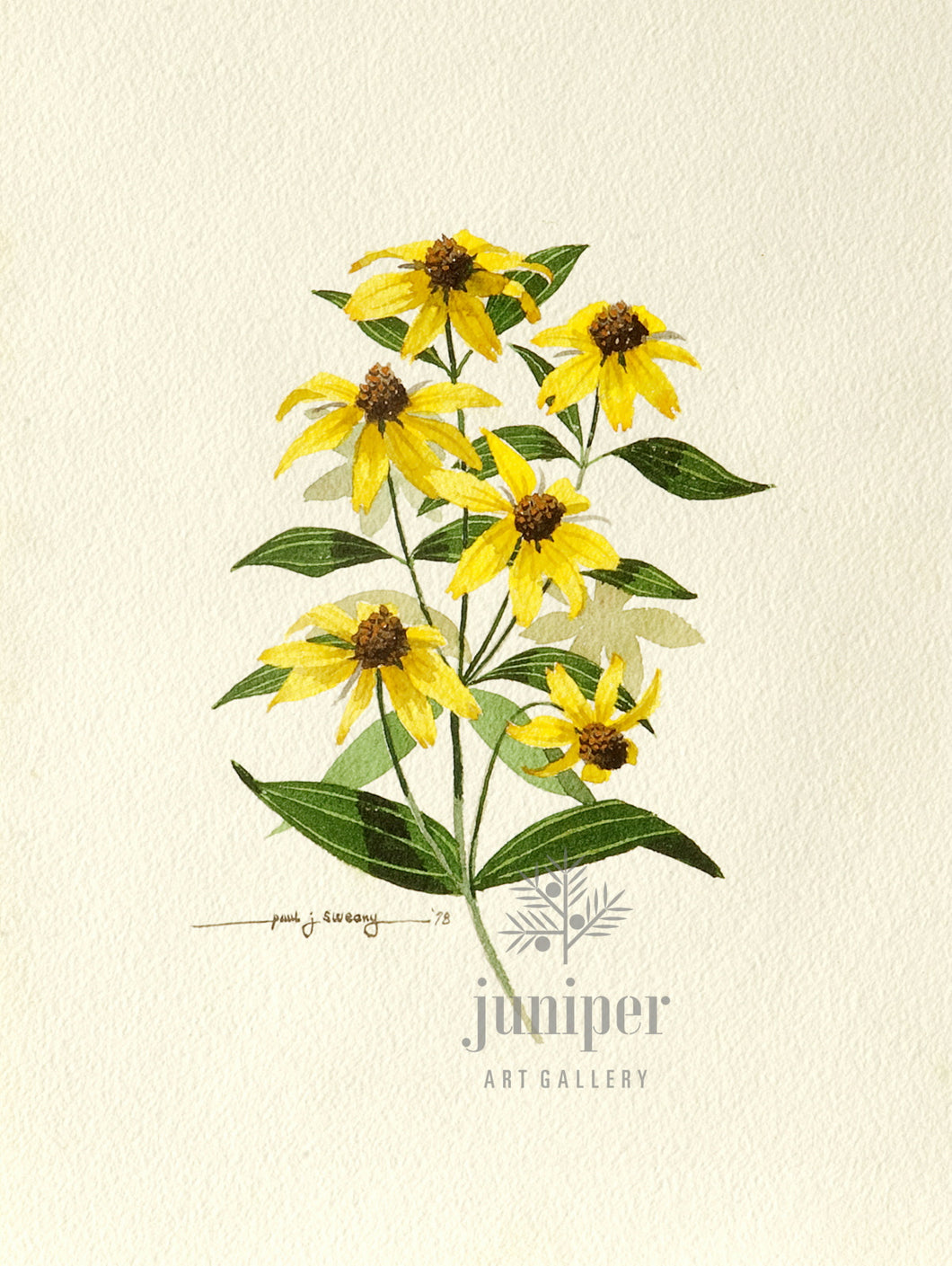 Black Eyed Susans, giclee reproduction from original watercolor (1978) by Paul J Sweany