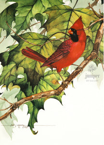 Cardinal on  Sycamore Branch by Paul J Sweany