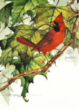 Cardinal on Sycamore Branch (reproduction from original watercolor by Paul J Sweany)