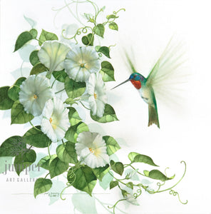 Hummingbird on Morning Glory (reproduction from original watercolor by Paul J Sweany)
