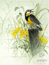 Meadow Lark (reproduction from original watercolor by Paul J Sweany)