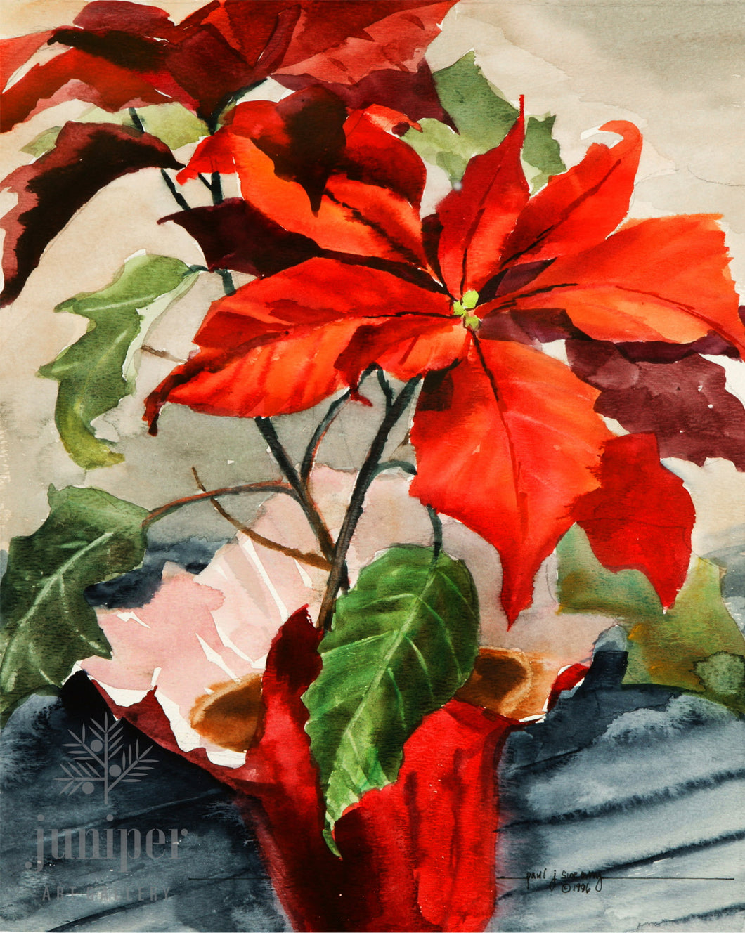 Poinsettia, reproduction from original watercolor by Paul J Sweany