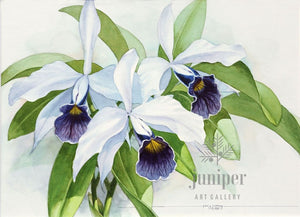Purple and White Cattleyas, reproduction from original watercolor by Paul J Sweany
