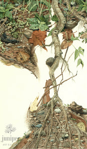 Root Image (reproduction from original watercolor by Paul J Sweany)