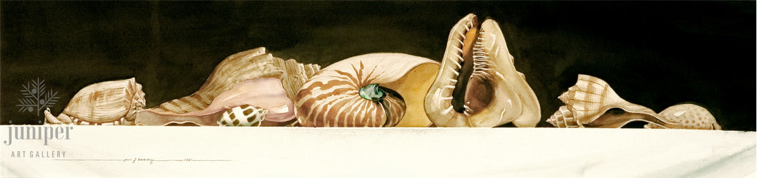Sea Shell Study by Paul J Sweany
