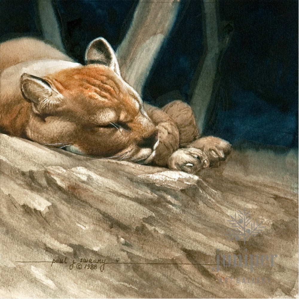 Sleeping Cougar (reproduction from original watercolor by Paul J Sweany)